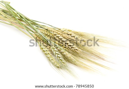 ear of rye on a white background - stock photo