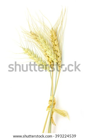 Ear of wheat isolated on white background.