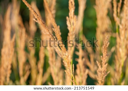 Ear plant close up  - stock photo