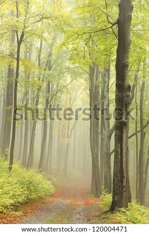 Early autumn beech forest in the mountains of the southern Polish.