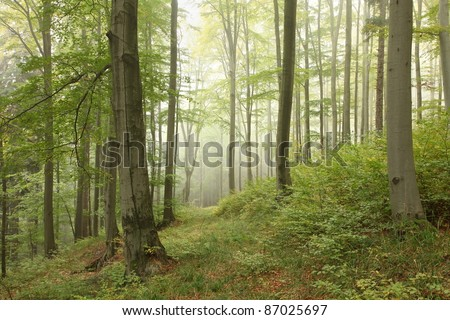 Early autumn deciduous forest in central Europe. - stock photo