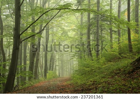 Early autumn forest after rain with mist in the distance. - stock photo