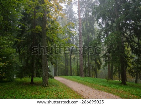 Early autumn forest after rain with mist in the distance - stock photo