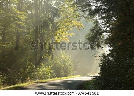 Early autumn forest on a foggy morning. - stock photo