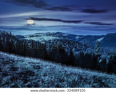 early autumn landscape. field in front of coniferous forest on a steep hillside in romanian mountains at night in full moon light - stock photo