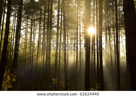 Early autumn morning - all in a fog and the sun - stock photo