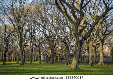 Early evening light in Central Park, New York City - stock photo