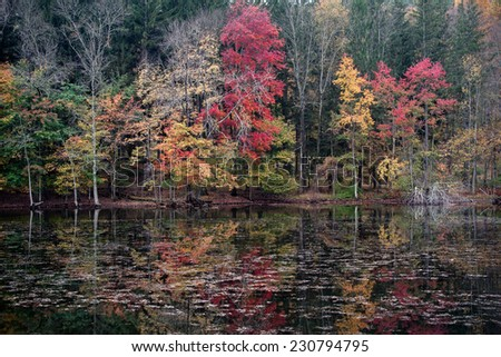 Early morning autumn view of trees reflected in the lake. - stock photo
