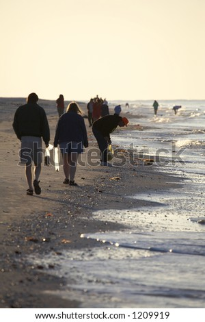 Early morning avid shell hunters looking for freshly washed up sea shells near bowmans beach famous for the abundance of shells on Sanibel Island Florida America united states taken in march 2006 - stock photo