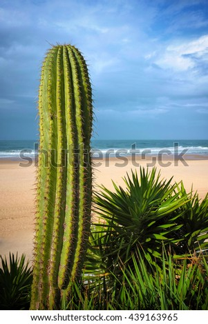 Early morning beach scene with a big cactus with spikes on the foreground - stock photo