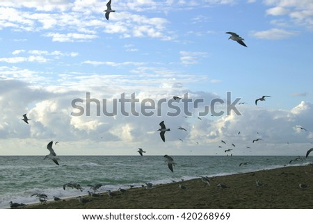 Early Morning Birds in Flight