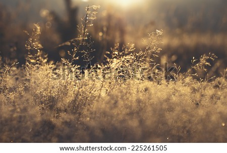 early morning dew and frost on tree brach, natural winter background with vintage effect - stock photo