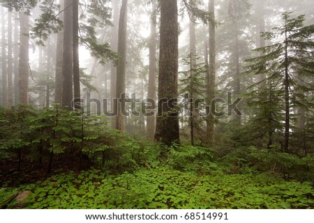 Early morning fog in the forest - stock photo