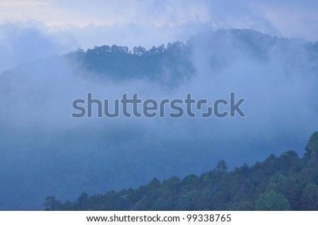 Early morning fog in the mountains Sakura pink flower Khun Mae Ya. Chiang Mai, Thailand.