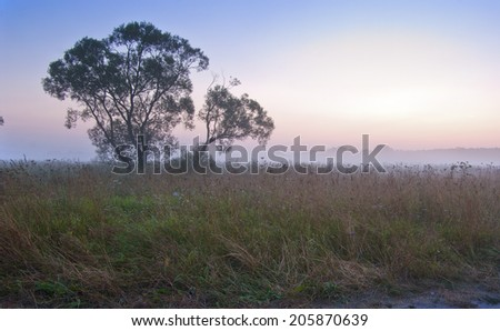 Early morning. Fog. Lonely tree on a meadow - stock photo