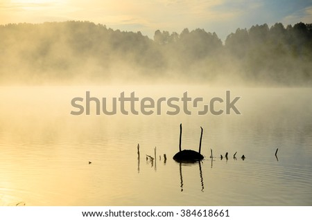 early morning fog on the lake  - stock photo