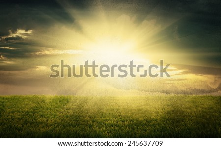 early morning fresh green grass on rural field, natural vintage background - stock photo