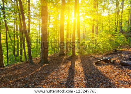 early morning in a green forest - stock photo