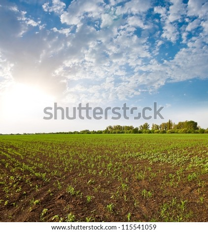 early morning in a rural fields - stock photo