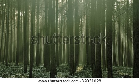 Early morning in a winter forest - stock photo
