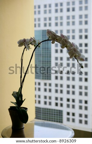 Early morning in five star hotel, Singapore - stock photo