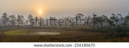 Early morning in the bog - stock photo