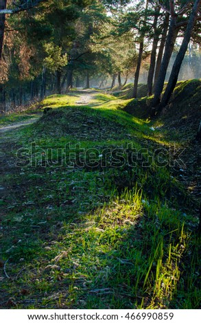 Early morning in the forest with sun rays over the trees and green grass