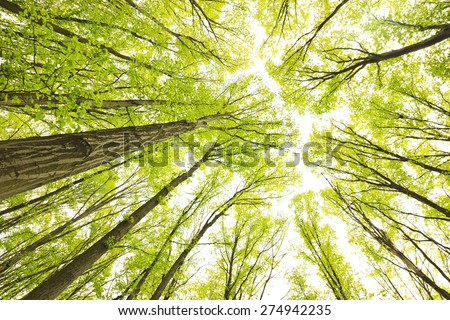 Early morning in the green forest at autumn  - stock photo
