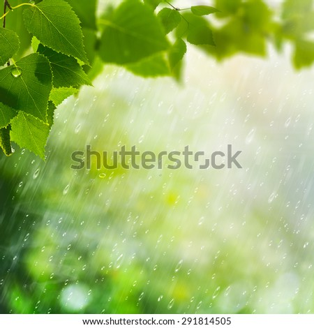 Early morning in the spring forest, abstract natural backgrounds - stock photo