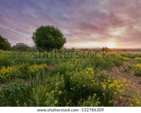 Early morning mist in blooming fields, cloudy pastel sky