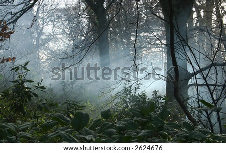 early morning mist in woodlands