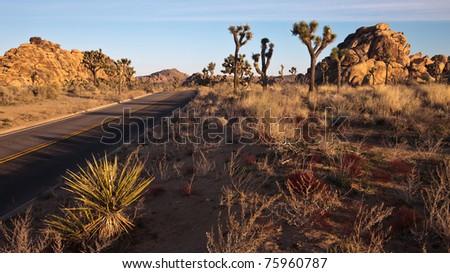 Early morning panorama of Joshua Tree National Park, California. - stock photo