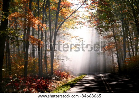 Early morning scene in Allegheny national forest - stock photo