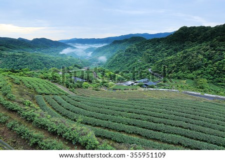 Early morning scenery of tea gardens in fresh spring atmosphere with ethereal fog in the distant valley, in Ping-ling, Taipei Taiwan - stock photo