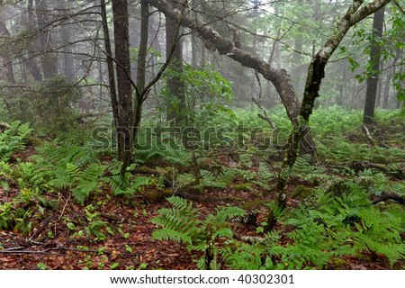 Early morning shot in the woods of North Carolina. Misty, foggy and atmospheric - stock photo