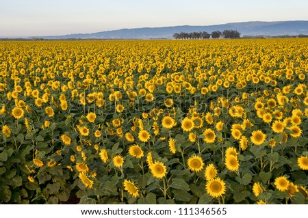 Central Valley California Agriculture Stock Images