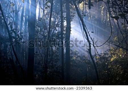 Early morning sun in a tropical forest - stock photo