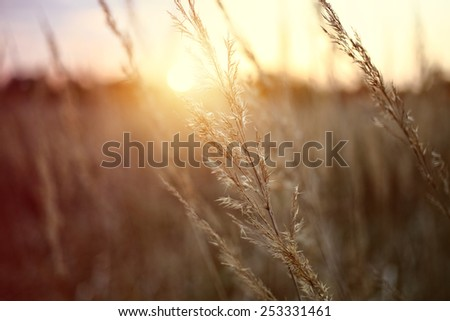 Early morning sun on the meadow - stock photo