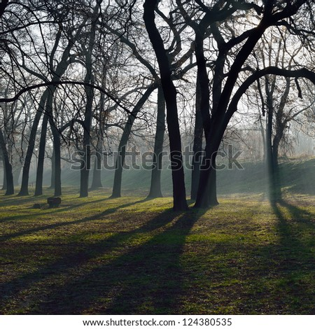 Early morning sun rays and shadows of trees in park - stock photo