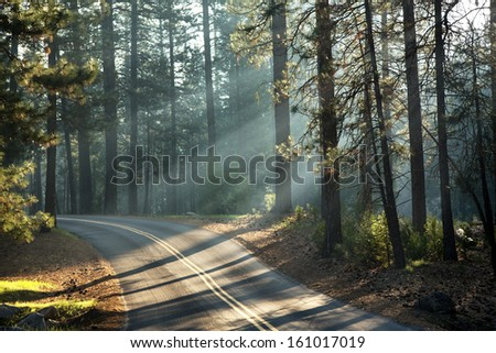 Early morning sunlight in the forests of Mariposa Grove, Yosemite National Park, California, USA - stock photo