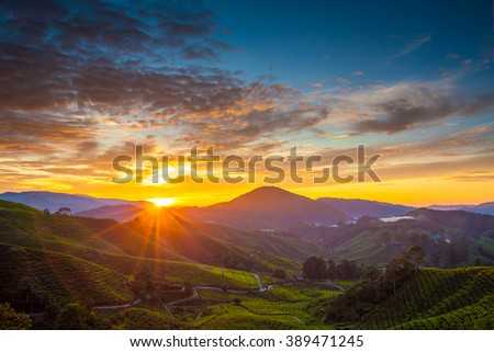 Early morning sunrise over hilly tea plantation in Cameron Highlands, Pahang, Malaysia. horizontal - stock photo