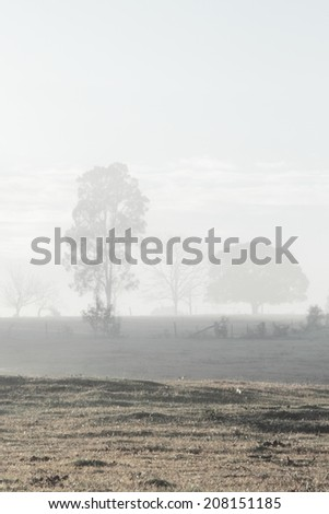 early morning winter fog with sun flare rural australia