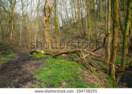 Early spring in Dean Woods, England. - stock photo