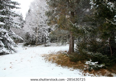 Early spring in forest. Half winter, half spring. - stock photo