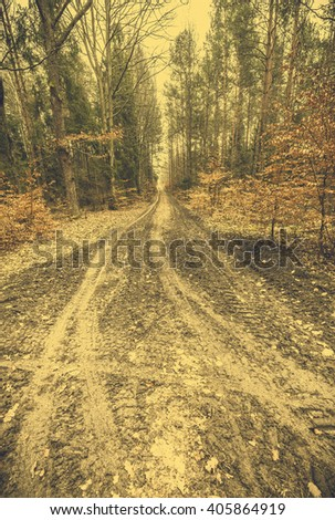 Early spring in the forest landscape, forest path, vintage photo