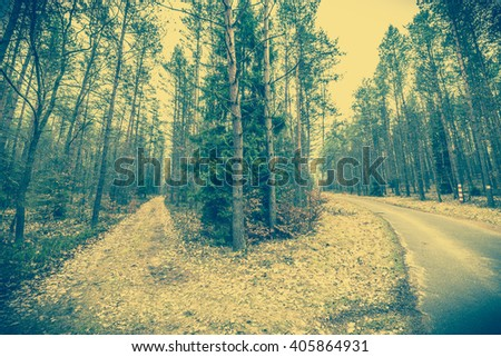 Early spring in the forest landscape, fork roads, vintage photo - stock photo