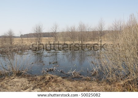 Early spring on the peat bog. - stock photo