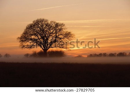 Early spring sunset across a field with an old tree in the horizon