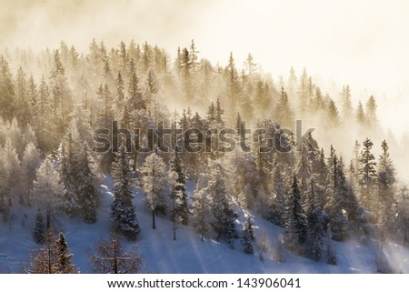 Early sunbeams shining trough the forest in the Italian alps with fresh snow - stock photo