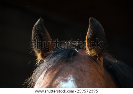 Ears brown horse close-up on a dark background - stock photo